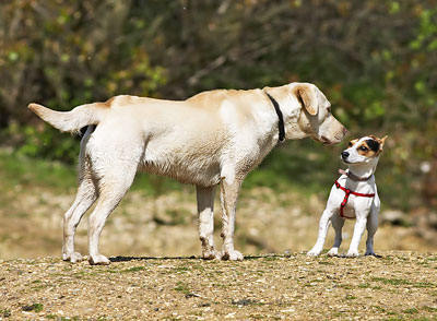 Andrehunde