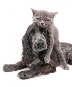 Hund-kat